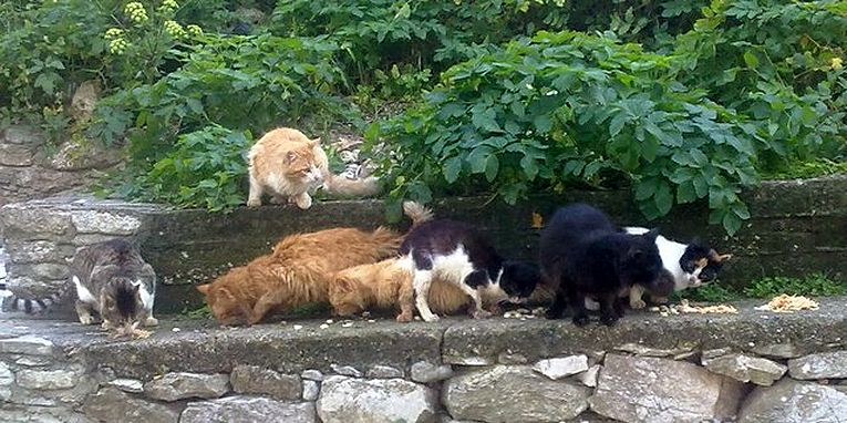 Feast Cats